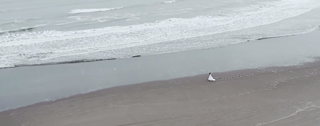 MV撮影 : 九十九里浜(千葉県)